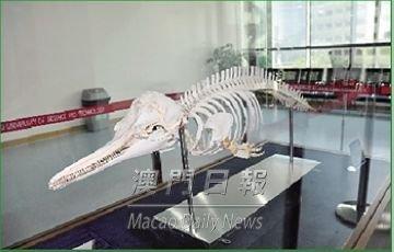 澳门科技大学获赠珍贵中华白海豚标本(图)