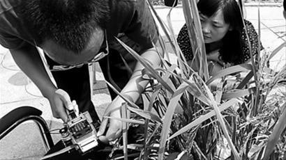 访袁隆平:超级稻究竟是不是转基因作物
