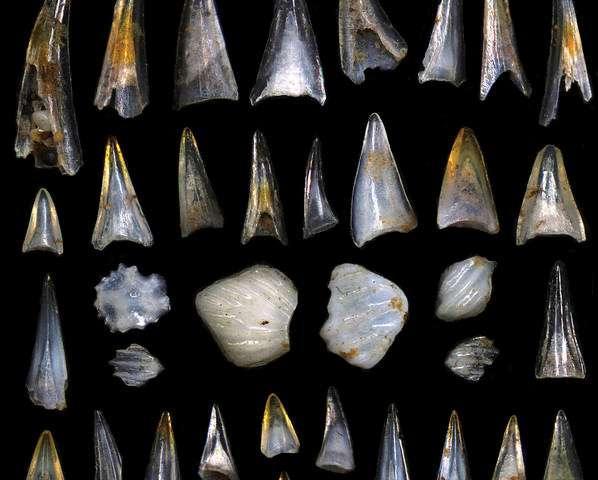 恐龙的灭绝给了鱼类蓬勃发展的机会