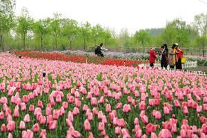 蓟州区 有花有果赏景尝鲜