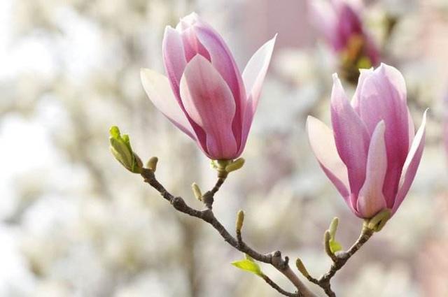 4月《津遇良缘》回到老地方!又制造两对浪漫奇迹