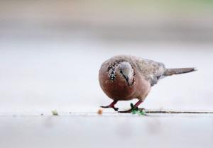 回家庄鹭鸟迎来新伙伴 野保站动物种群扩大