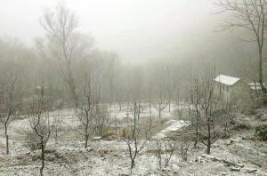 蓟州飘雪美成一幅画 市区也出现短时零星降雨