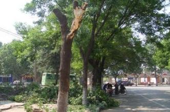 天津出台暂行办法2月起实施 依法管护城市大树