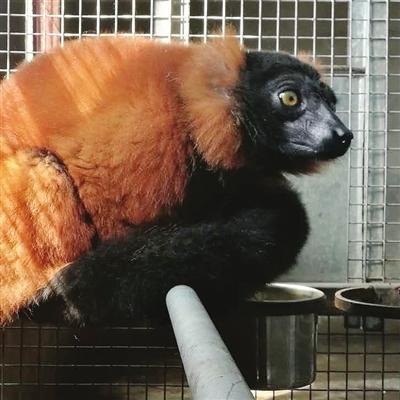其他动物则为30天,水生动物为14天),并在入境7天内逐头采血,送实验室