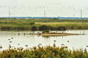 超10万只候鸟飞抵北大港湿地