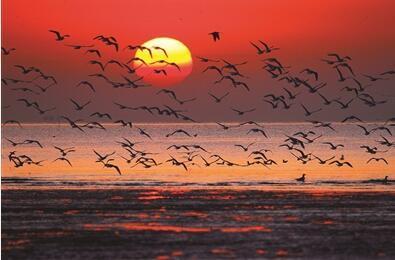 镜头聚焦野鸟风姿 快门留证美丽滨海