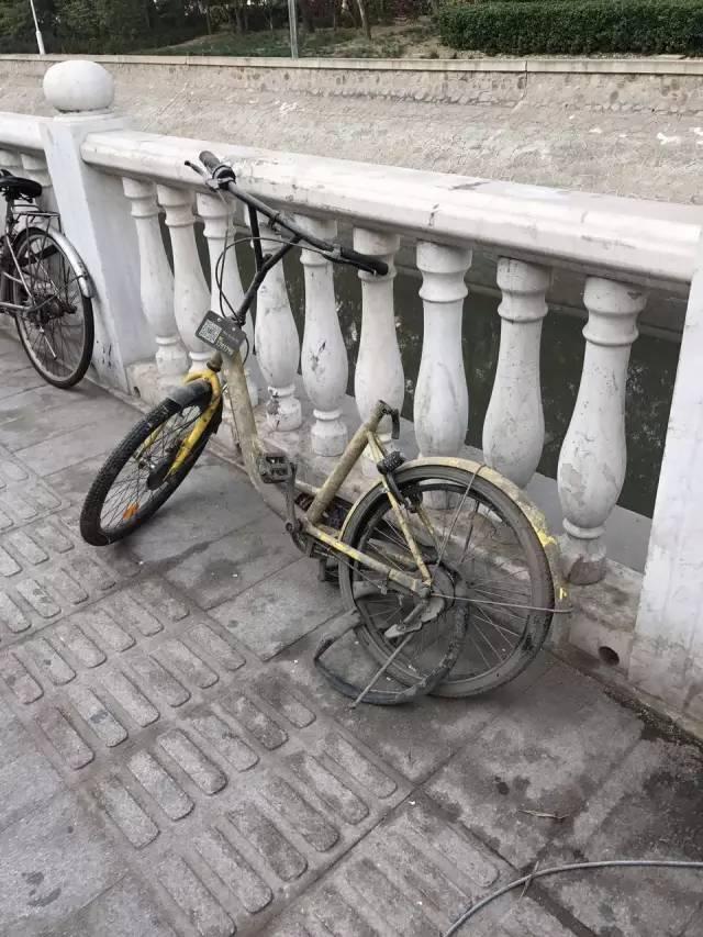 谁干的?真缺德!天津河底竟发现这么多共享单车