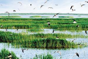 北大港湿地将建国家级生态公园