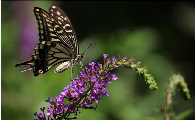 关于家居风水 你说家里飞来蝴蝶好不好