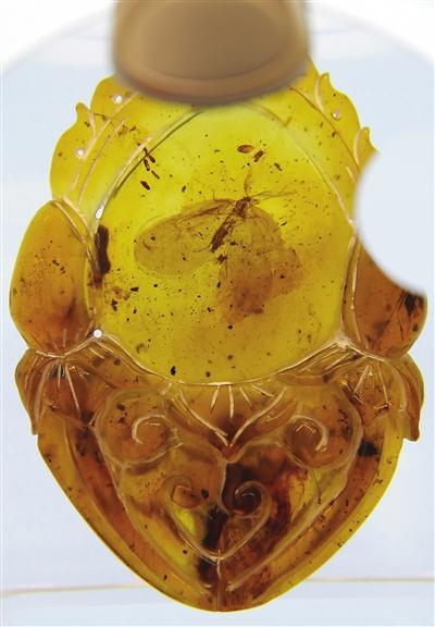 天津自然博物馆虫珀特展《时光胶囊》开展