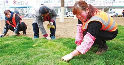 西青区加强园林绿化养护 营造城镇优美景观