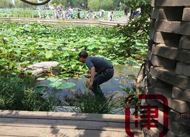 """水上公园上演""""捞鱼比赛"""" 不文明游人捞鱼忙"""
