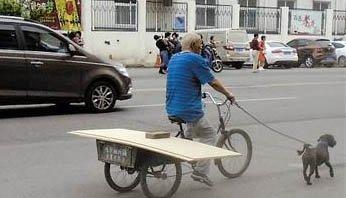 河东区一大爷骑车遛狗
