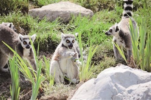 萌宠王国欢乐多——天津动物园