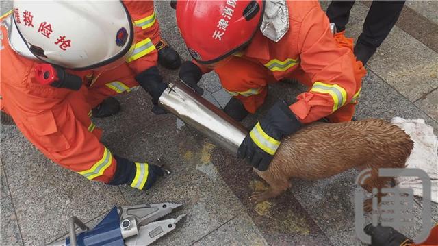这只小狗会玩 钻进地灯出不来 消防员破拆获救