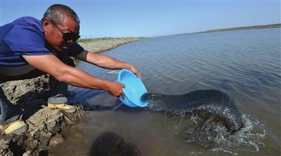 滨海新区一水产养殖合作社投放南美白对虾苗