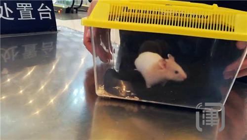 四小时截获两只仓鼠 学生变花样带宠物上高铁