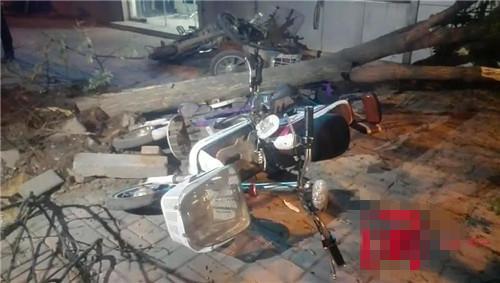公交车刹车失灵撞倒大树 四辆电动遭殃及