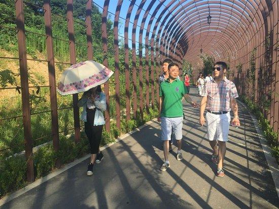 市政处交工路桥区中央山南片绿道工程召开v中央武汉大型的装修设计公司排名图片