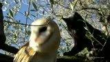 猫头鹰和猫嬉戏打闹