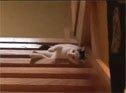 躺着下楼梯的懒喵