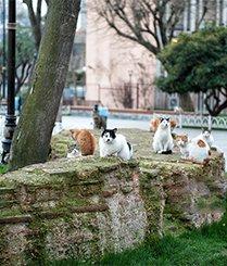 第一个被猫咪占领的城市