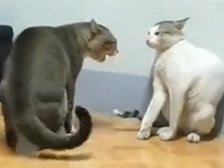 功夫猫出快拳打遍天下无敌手