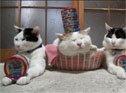 猫叔表演头顶罐头