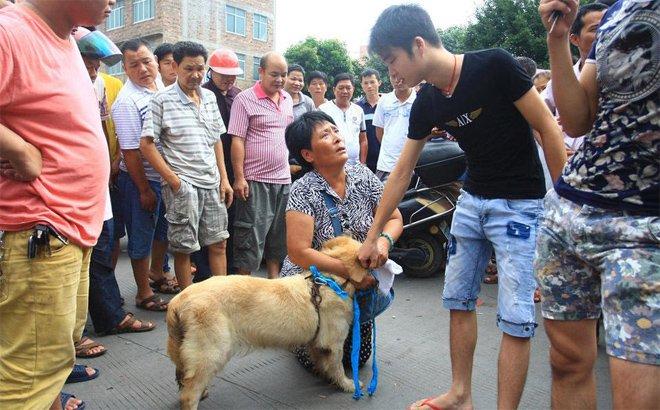 """在玉林给狗贩下跪的""""爱狗大妈""""被当成动物保护代表"""