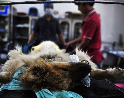 国外如何保护动物