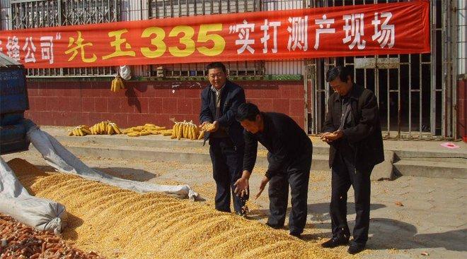 """美国的""""先玉335""""种子迅猛占领中国市场"""