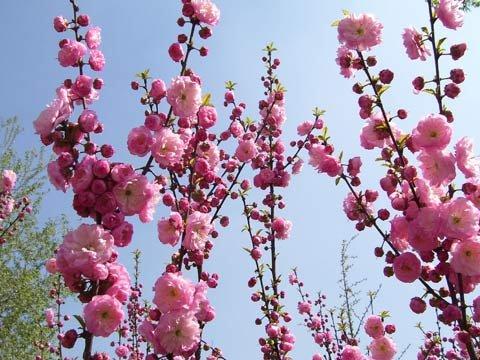 ... 开花植物图片开花类盆栽植物图片 开花植物图片图片