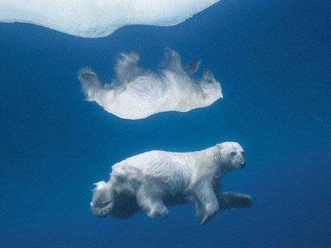 地球最难捕捉景象 环斑海豹浮上水面呼吸