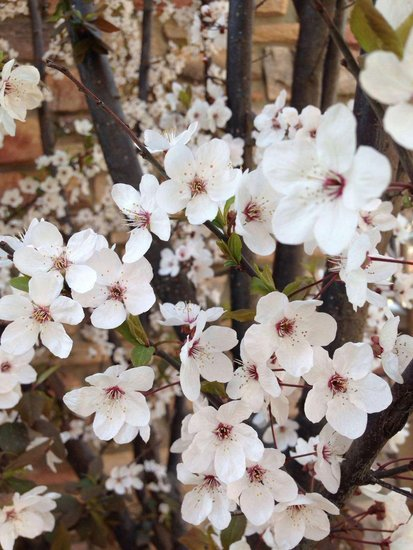 海宴台游园踏春会—品茶·赏花·微摄影百元现金欢乐送