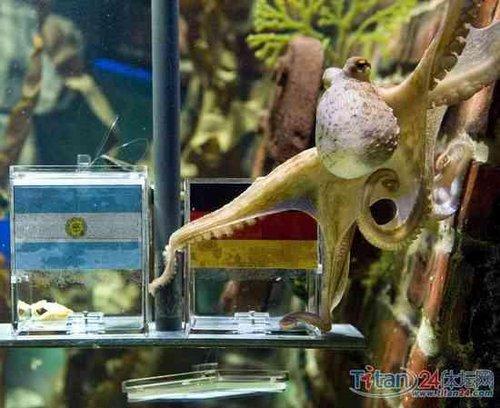 神算子小章鱼再做预测 德国战胜阿根廷进四强