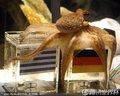 章鱼帝预测德国胜(4)