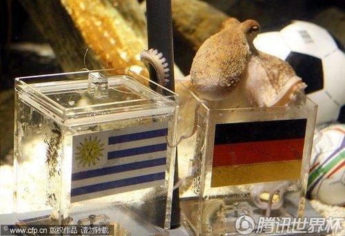 2010世界杯3、4决赛前瞻:章鱼帝预测德国胜乌拉圭夺得季军