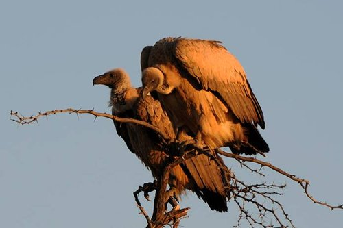 观鸟胜地:稀有物种鸟类的家园——南非