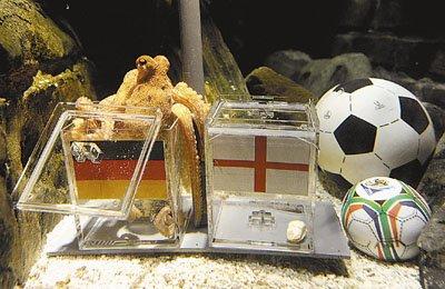 章鱼预测德国胜英格兰 此前成功预测德国比赛