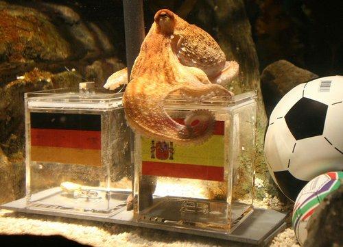 德国章鱼成西班牙国宝 西首相:给它配个保镖