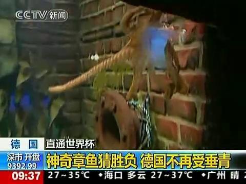 视频:神奇章鱼帝惊人预测 德国败于它爪下?