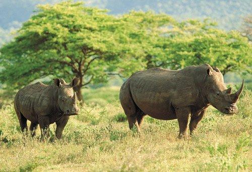 克鲁格国家公园(Kruger National Park)