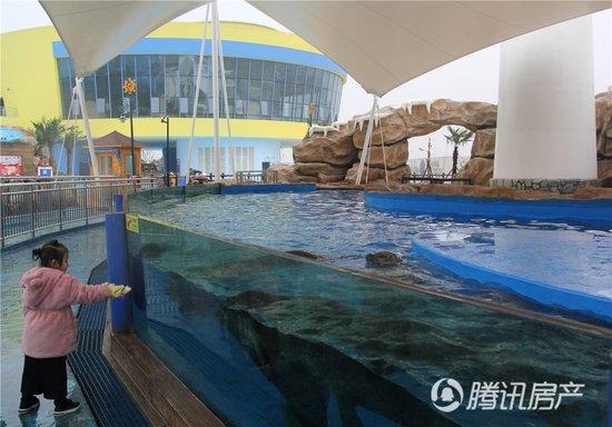 芜湖首场夜宿海洋馆迎来体验者 大白鲸海洋公园创亲子梦幻空间