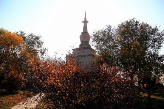 """乌鲁木齐水塔山""""树上山""""项目年底前完成15亩绿化"""