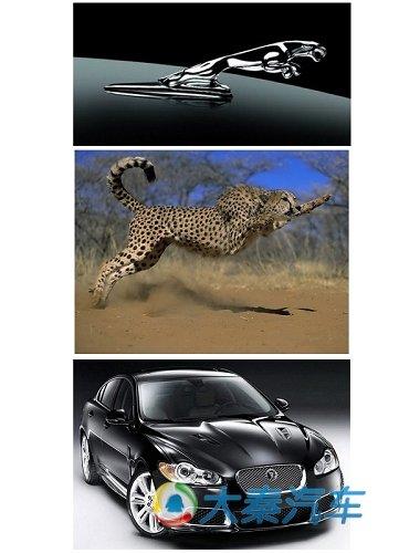 源自于动物身上的灵感 汽车仿生学设计理念