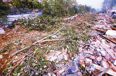 千棵行道树被砍