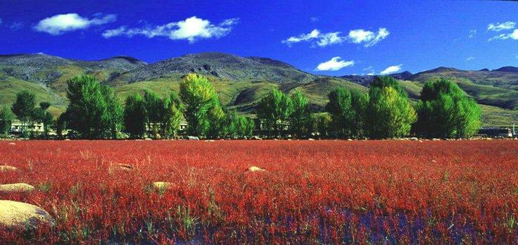 景色看点:马背上欣赏俄初山梦幻般的秋日红叶。 秋天的稻城,是色彩最绚丽的季节。深邃幽蓝的天空,如火耀眼的红枫,金黄的万亩白杨林所有浓烈的色块一起散落,铺陈在群山黛色逶迤的背景上。无论从什么角度,取景框里永远是一幅绝美的图画。 如果来到日瓦乡,乘车沿着崎岖的山路向闪光之山俄初山进发,会投入满山红叶的拥抱,从金黄到浅红再到深红,一路的惊艳将伴你走过6小时行程。 此时,摄影界极其出名的红草地风景即将出现,桑堆小镇的红草地正逐渐转红,迎来一年中最美丽的时候。 [责任编辑:wyxatour]