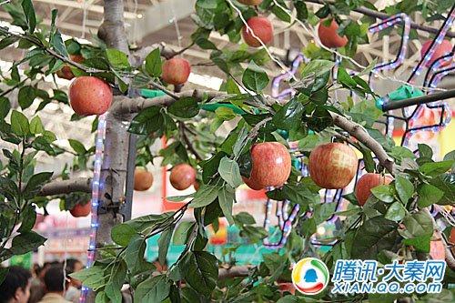 咸阳馆前摆放着真实的苹果树,也向参观者直观的叙述自己的强势产品