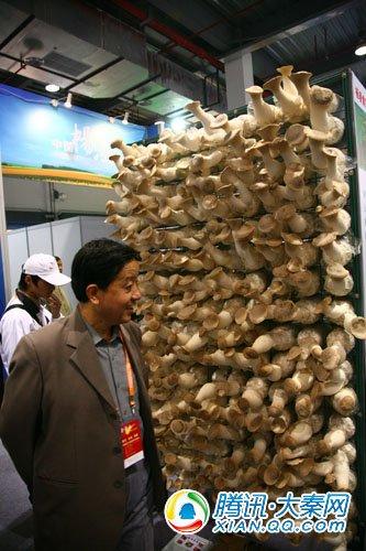 巨型蘑菇墙吸引参观者驻足